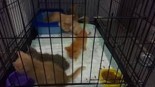 """Детки в клетке (Приют для кошек """"Домик"""")"""