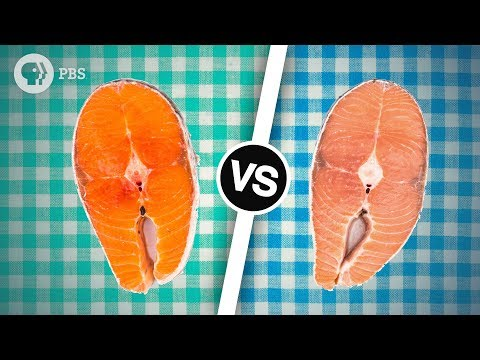 Wild Salmon Or Farmed Salmon? Which Is Better? | Serving Up Science