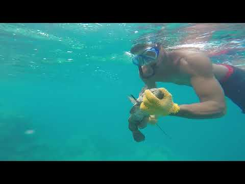 Fishing under water in French Polynesia