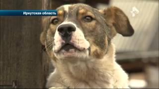 Дикие медведи под Иркутском разрывают на части собак и разоряют дворы