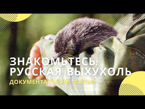 """Фильм  """"Знакомьтесь: русская выхухоль"""""""