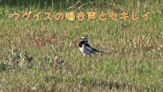 Suo Nagato https://stock.adobe.com/jp/contributor/208781007/Suo%20Nagato Suo Nagato https://nagami.myportfolio.com/