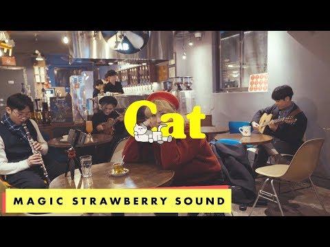 선우정아 / SWJA - '고양이' 와우산로 LIVE