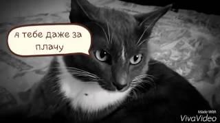 Кот хочет секса клип