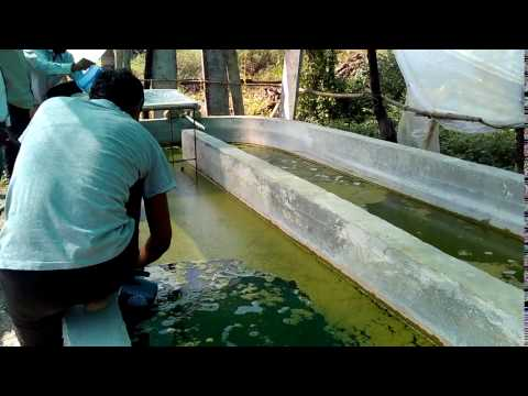Spirulina Training Programme 7057700035