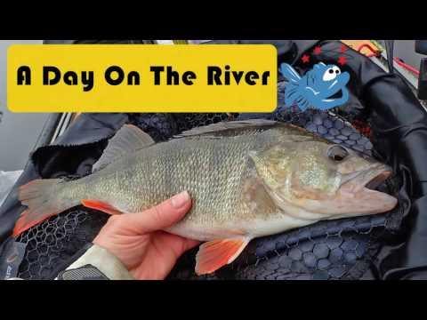 Big Perch, Pike And Chub Kayak Fishing On The River