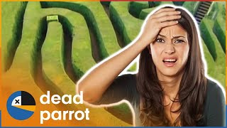 Getting Trapped In A Maze - Trigger Happy TV