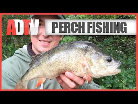 How To Catch Perch - Perch Fishing Tips
