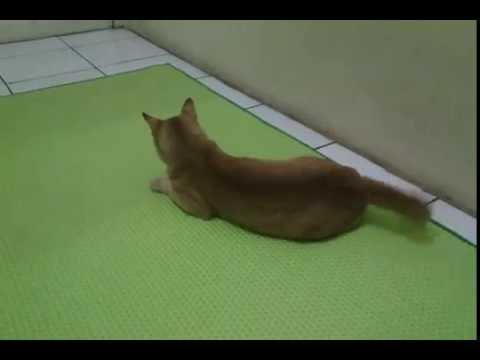 Gambar Kucing Main Bola Gambarrrrrrr