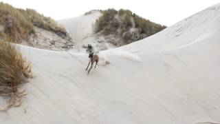 whippets running and playing at beach!! crazy jumping and turning on sand dunes!