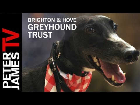 Peter James | Patron of Brighton & Hove Retired Greyhound Trust