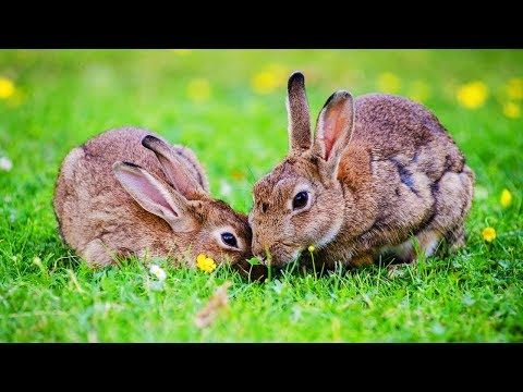 Les animaux de la ferme le lapin youtube - Animaux ferme photos ...