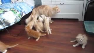 Стоимость усыпления кошки в Москве