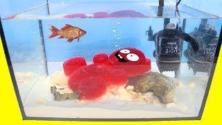 Lucky Bär richtet sein eigenes Aquarium ein