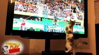 O pisica pasionata de gimnastica priveste la televizor