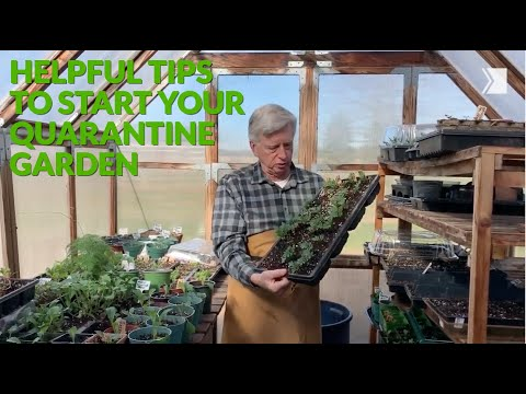 Gardening expert Mark Cullen gives a tour of his greenhouse