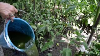 Зелёное удобрение без материальных затрат! Экологично и практично!(, 2016-07-05T13:21:41.000Z)