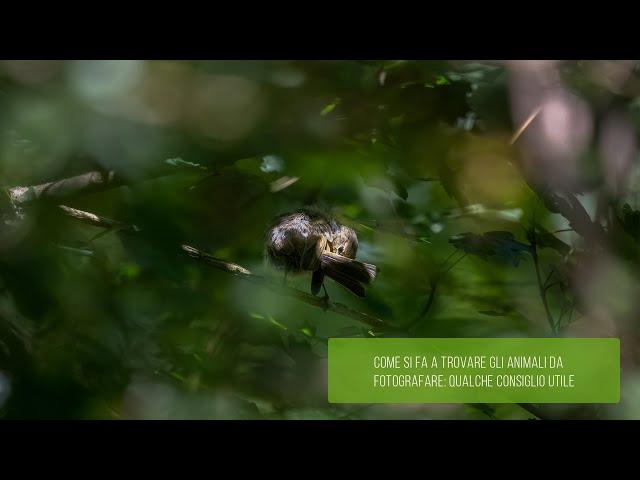 Come si fa a trovare gli animali da fotografare: qualche consiglio utile