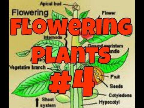 Flowering plants part 4 (Harvest and Trim)