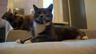 видео Антивандальная ткань для дивана от кошек антикоготь