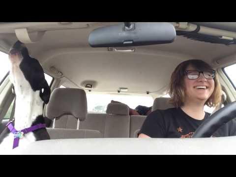 Dog singing Michael Jackson