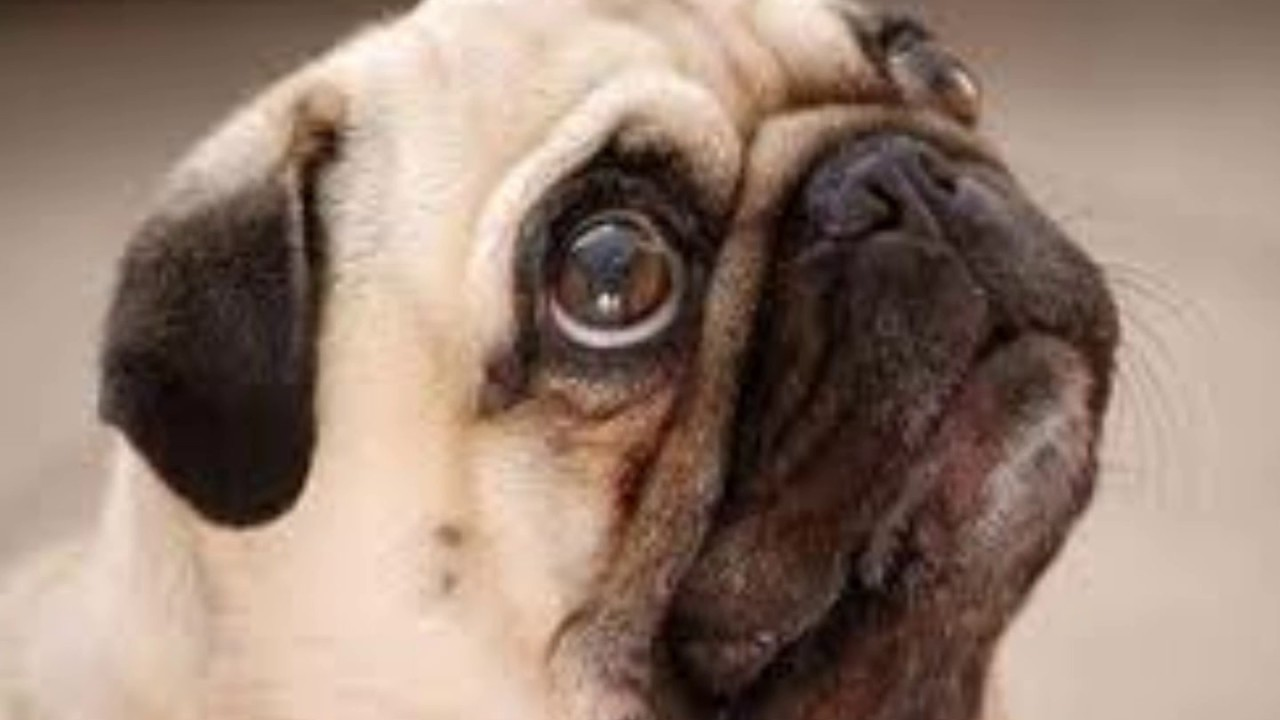 Top 10 cani pi belli del mondo secondo me youtube for I gioielli piu belli del mondo