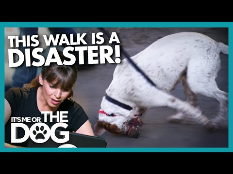 Incorrectly Leashed Dog Gets Tangled on Nightmare Walk | It's Me or the Dog