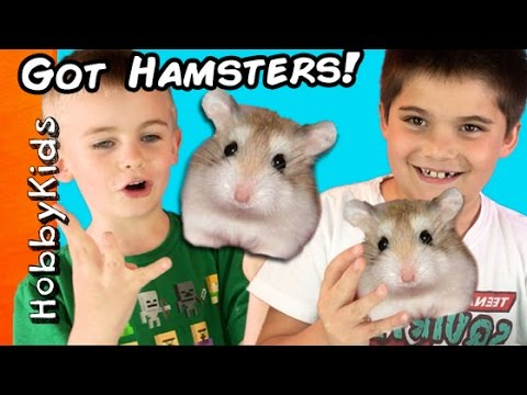 HobbyKids Buy Hamsters!  Petco Toy Shopping Haul HobbyKidsTV