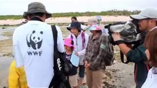 WWFジャパンによる親子ワタンジ観察会 シカクナマコが大変身