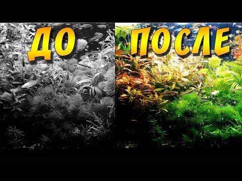 Аквариум ДО и ПОСЛЕ подмены воды!