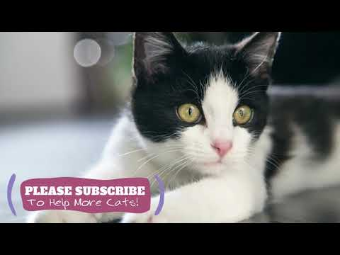 Soothing for Cats - 1 Hours Relaxing ASMR for Your Cats! TESTED ☯LCZ42