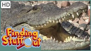 "Finding Stuff Out – ""Animals Big and Small"" Season 1, Episode 10 (FULL EPISODE)"