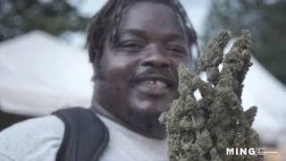 Legal Marijuana in Jamaica w/ The Bubbleman
