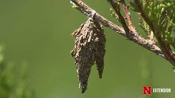 What happens to insects during the winter?