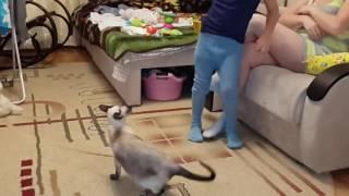 Смешная кошка! Нападение кошки.