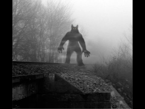 5 TRUE SCARY Dogman Encounter Horror Stories By Witnesses: Michigan Dogman
