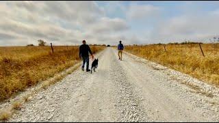 조용한 미국 시골 산뽀 | 말, 소, 닭 이 있는 길 …