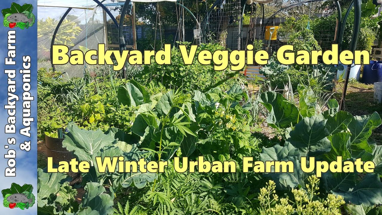 backyard veggie garden late winter urban farm update youtube