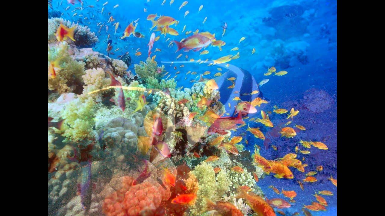 Paisajes fondo del mar youtube - Fotos fondo del mar ...