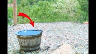 This Family's Water Barrel Mysteriously Emptied Every Night  Then They Discovered The Culprit
