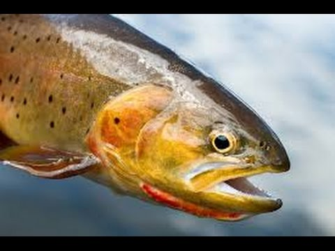 Yellowstone River Fishing