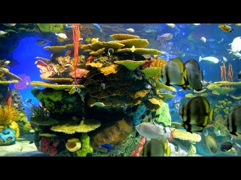 Aquarium - Lofi hip hop radio 24/7 - beats to work/study/chill