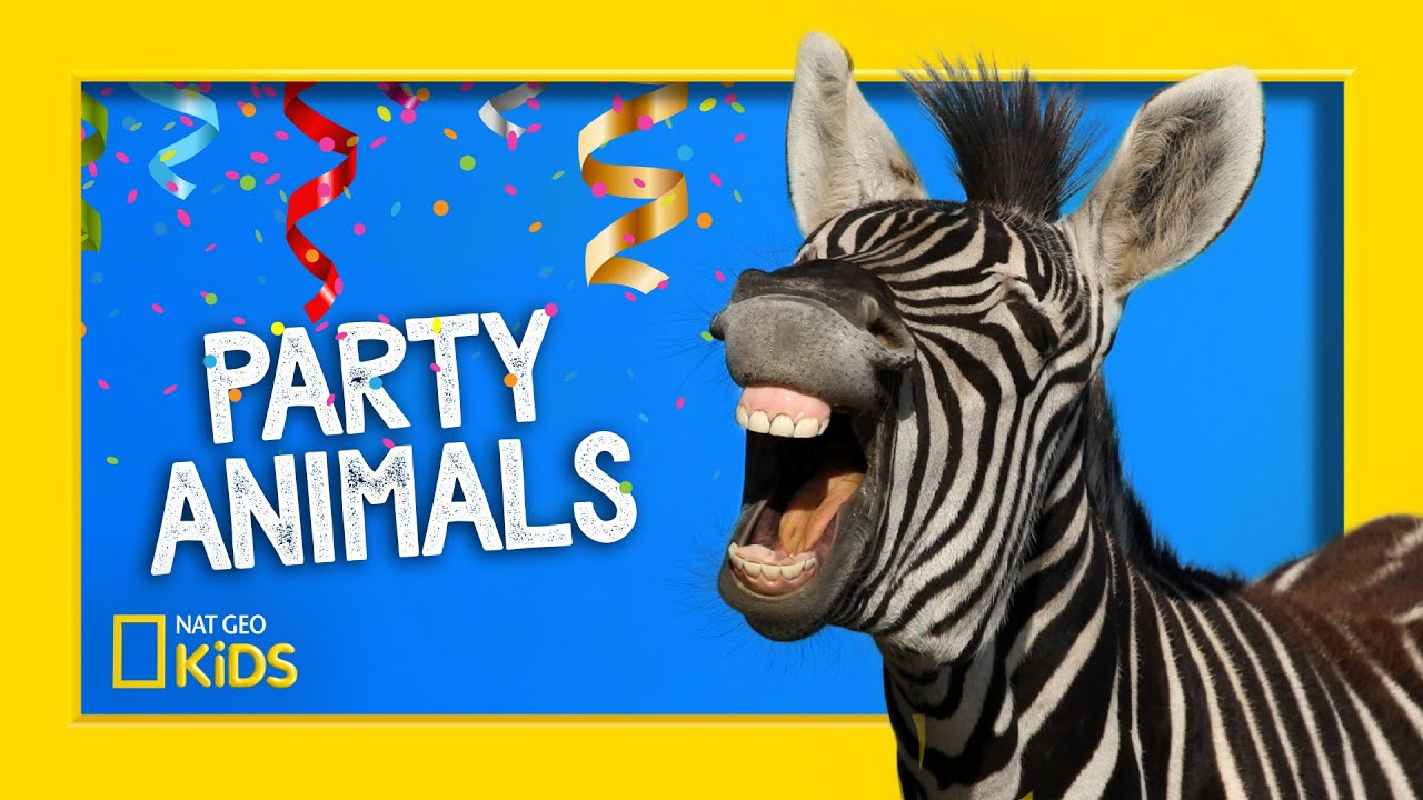 Party Animals REMIX! | Party Animals