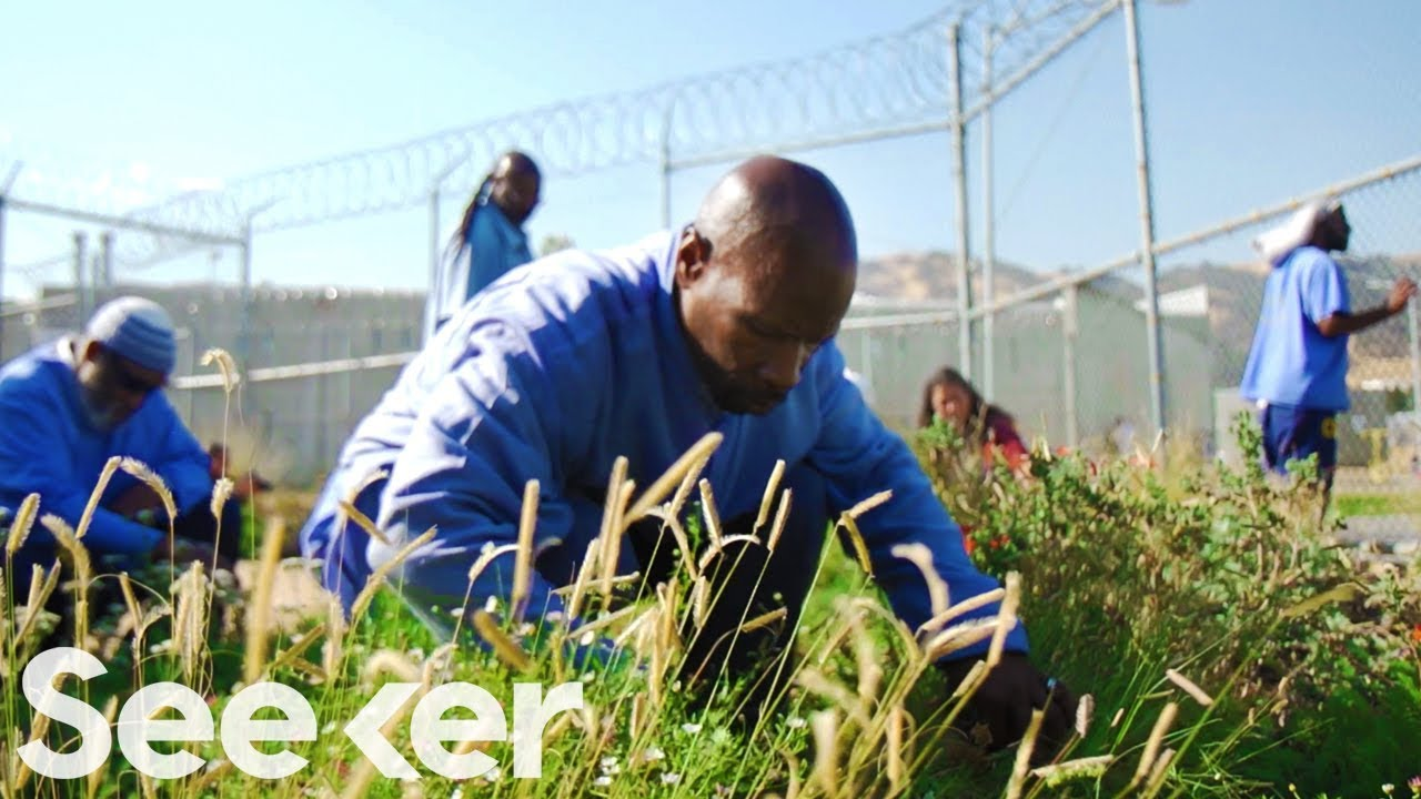 Could Meditation and Gardening Break The Cycle of Prison Recidivism?