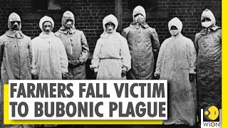 Your Story: China reports case of Bubonic plague | Farmers falls victim