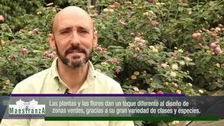 vuclip Maestranza Informativo inmobiliario/paisajismo/ capitulo 28 parte 2