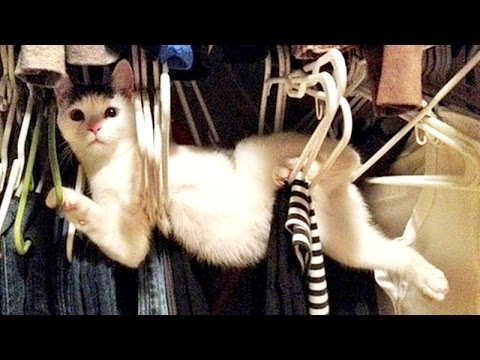 Funny animals can always make you laugh and cheer you up - Funny animal compilation