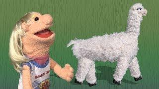 Sara Had A Little Llama - Nursery Rhyme For Children