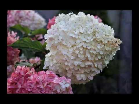 27 прелестных цветов  для  ВЛАЖНЫХ ПОЧВ
