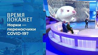 Коронавирус у животных Время покажет Фрагмент выпуска от 10 11 2020